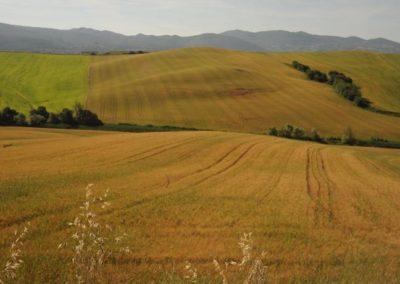 Podere Mandriato - Azienda Agricola