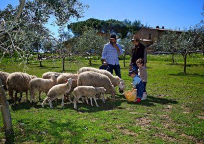 Azienda Agricola Il Meletto