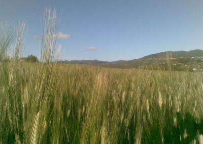 Terre di Creta (Azienda Agricola Biologica)