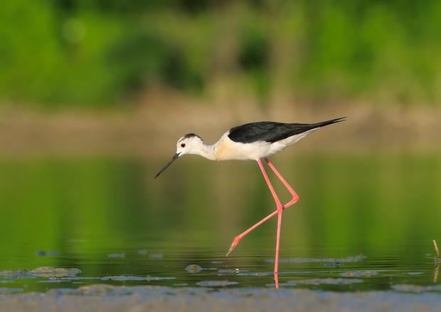 fauna lago santa luce
